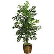 "56"" Areca Tree with Basket"