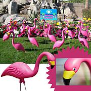 Bloem 50-Pack Pink Flamingo Lawn Statues