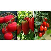 Leaf & Petal Designs 3-piece Taste of Italy Tomatoes
