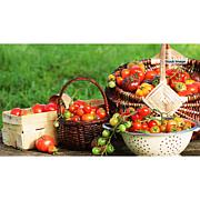 Leaf & Petal Designs 4-piece Gourmet Foodie Tomato Plant Set