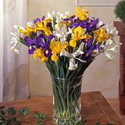 VanZyverden Dutch Iris Mixed 25-piece Mammoth Bulb Set