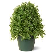 Winter Lane Artificial Topiary Boxwood Tree