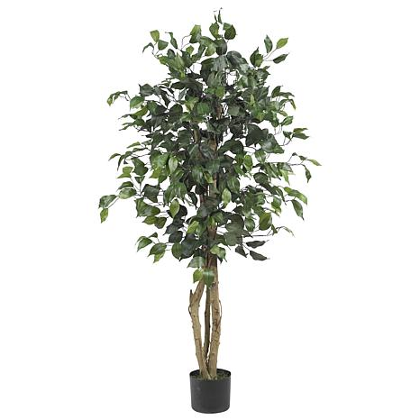 4' Ficus Silk Tree