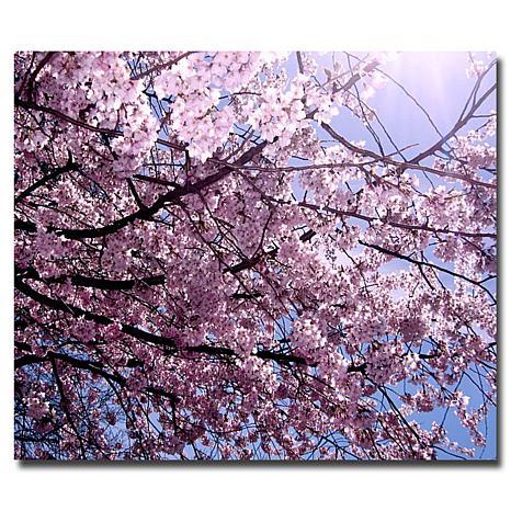 """Ariane Moshayedi """"Cherry Blossom Flare"""" Art - 35"""" x 47"""""""