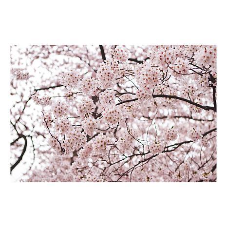 "Ariane Moshayedi ""Cherry Blossoms"" Canvas Art-35"" x 47"""