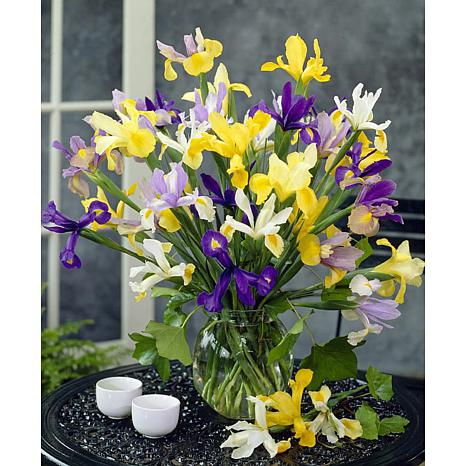 Dutch Iris Mixed Set of 25 Bulbs