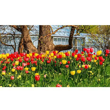 Leaf & Petal Designs 8-piece Tulip Bloom Pad