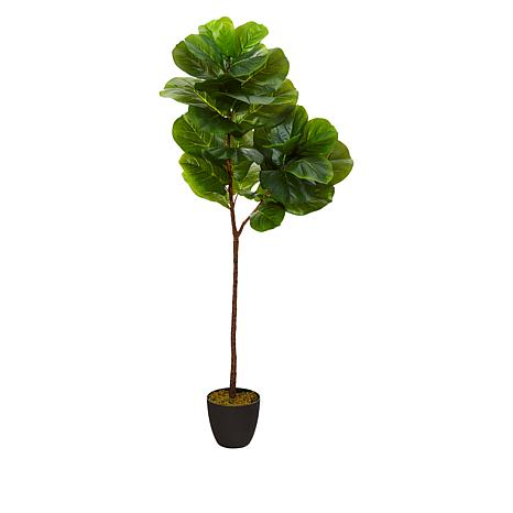 South Street Loft 5' Fiddle Leaf Tree in Nursery Planter