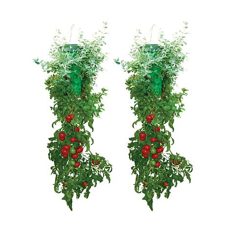 Topsy Turvy Set of 2 Deluxe Herb and Tomato Planters
