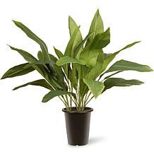 "30"" Artificial Aspidistra Plant"