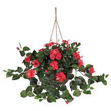 Hibiscus Hanging Basket