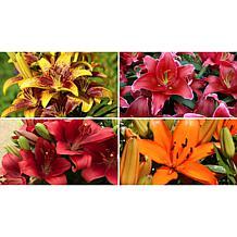 Leaf & Petal Designs 12-piece Lily Collection