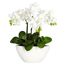 "Nearly Natural 15"" Phalaenopsis with White Vase"