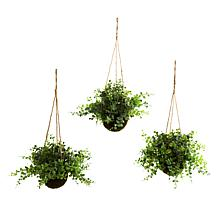 "South Street Loft Set of Three 12"" Assorted Hanging Baskets"
