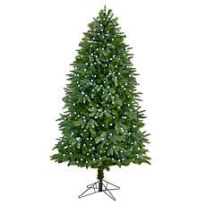 6.5' Fraser Fir  Christmas Tree with 550 Gum Ball Lights