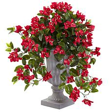 Bougainvillea with Urn