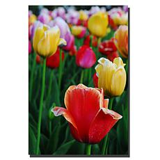 "Giclee Print - In Among the Tulips II 24"" x 36"""