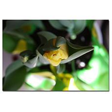 Giclee Print - Tulips II