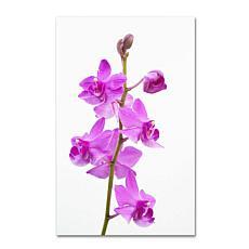 """Kurt Shaffer """"Purple Orchids"""" Canvas Art"""