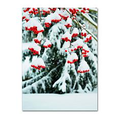 "Kurt Shaffer ""Winter Berries and Pine"" Canvas Art"