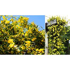 Leaf & Petal Designs 1-piece Carolina Jessamine