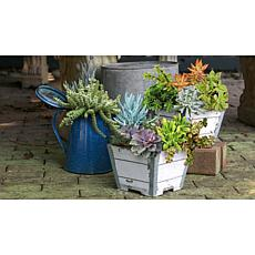 Leaf & Petal Designs 2-piece Patio-Ready Succulent Duo