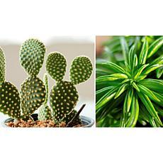 Leaf & Petal Designs 2-piece Succulent Duo