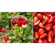 Leaf & Petal Designs 20-piece Quick-to-Bear Strawberries