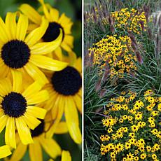 Leaf & Petal Designs 3-piece American Gold Rush Rudbeckia