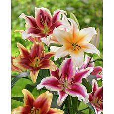 Lilies Tequila Sunrise Blend Set of 9 Bulbs