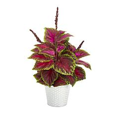 """Nearly Natural 25"""" Coleus Artificial Plant in Embossed White Planter"""