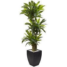 Nearly Natural 5.5' Corn Stalk Dracaena with Black Wash Planter