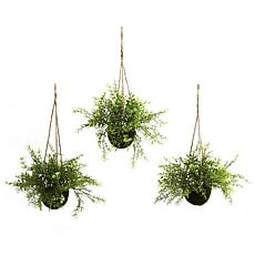 Ruscus, Sedum and Springeri Hanging Basket Set of 3