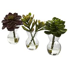 Succulent Arrangements Set of 3