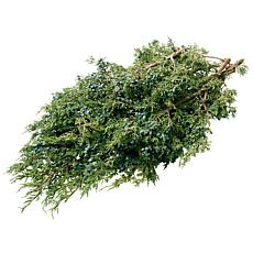 Van Zyverden Fresh Cut Pacific Northwest Blue-Berried Juniper Branches