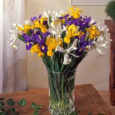 VanZyverden Dutch Iris Mixed 25-piece Mammoth Bulb Set