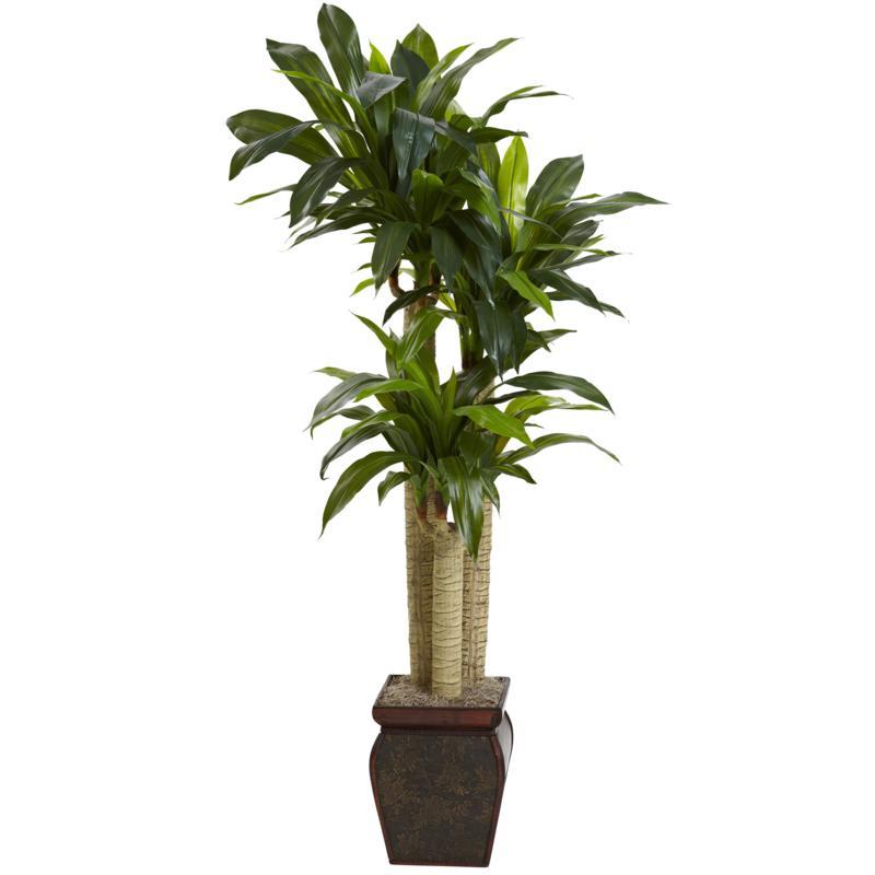 4 Ft. Cornstalk Draceana with Vase