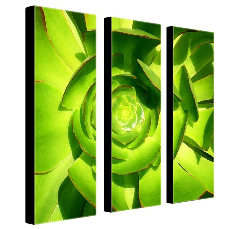 Amy Vangsgard 'Succulent Square' Art Collection