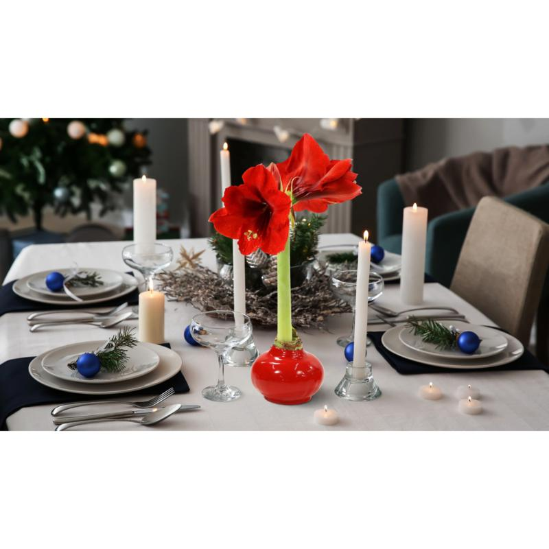 Leaf & Petal Designs Wax-Dipped Amaryllis Bulb - December Delivery
